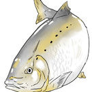 美國釣魚網釣魚協會!